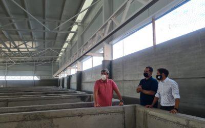 Gabriel Mato apuesta por el uso de los fondos europeos para incentivar la actividad acuicultora en Canarias